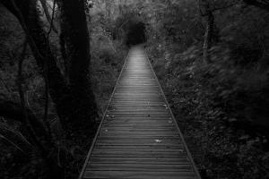 dark-path-970882